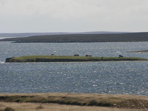 Cow Island Falklands