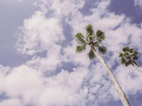 Sunny sky and palm trees.