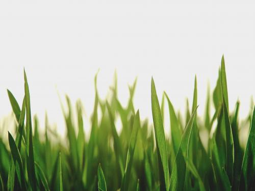 Horizontal photo of grass blades with sunlight blurred in the background.
