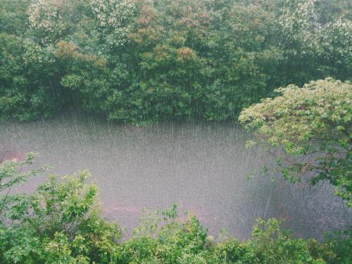 Horizontal photo of rain hitting a forest.