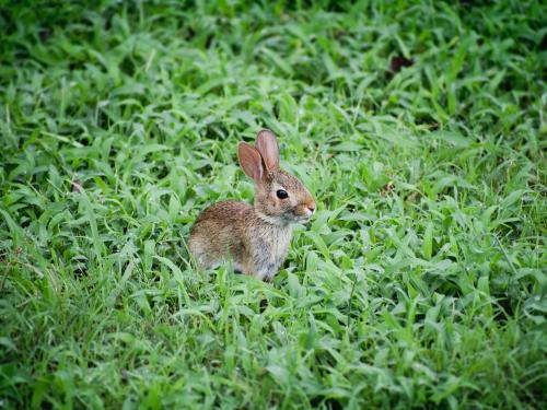 Rabbit in foliage.