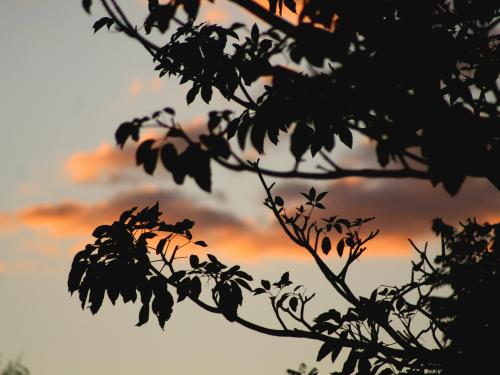 Horizontal photo of dark branches with orange clouds in the background.