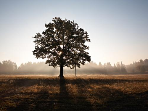 Horizontal photo of a tree silhouette.